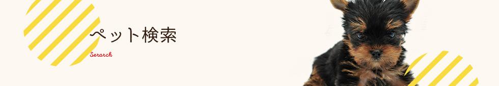 アメリカンショートヘアー(お母さんと一緒)デビューしました!!